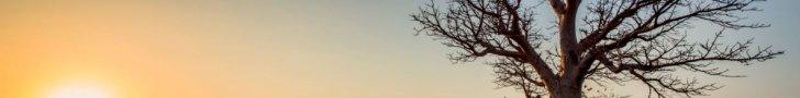 Izkaltis koks pļavā