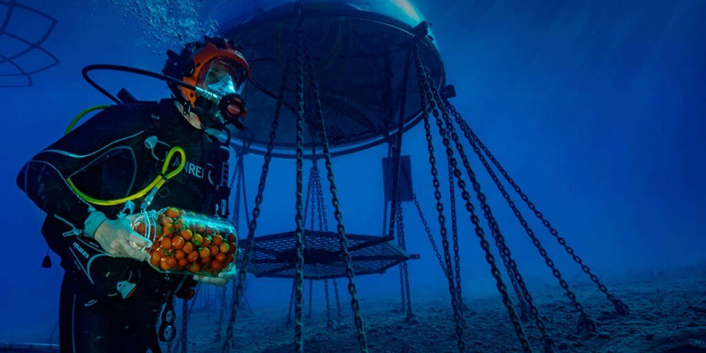 """Nemo dārzs"". Avots: nemosgarden.com"